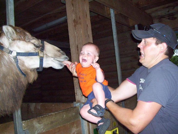 camello muerde la mano de un bebé