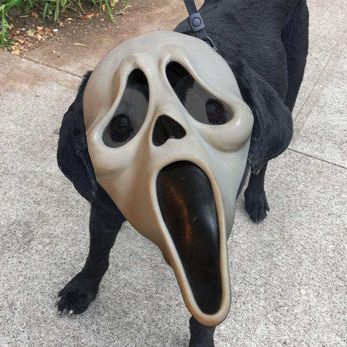 perro con máscara de scary movie