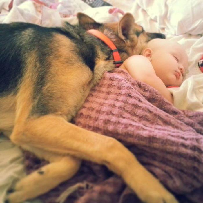 pastor alemán durmiendo con bebés