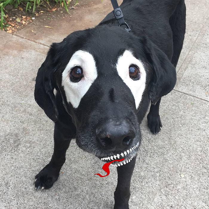 perrito editado como venom