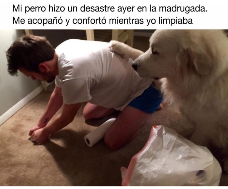 perrito con la pata sobre su humano