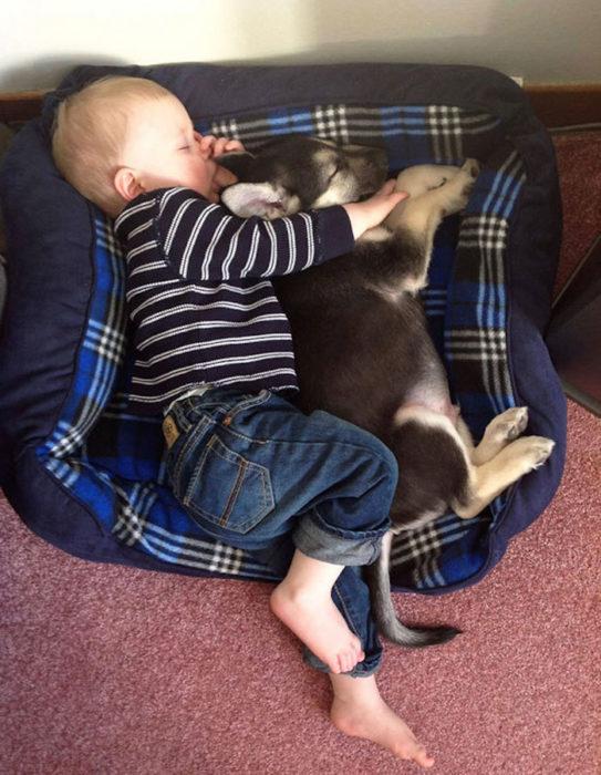 perro y niño acurrucados