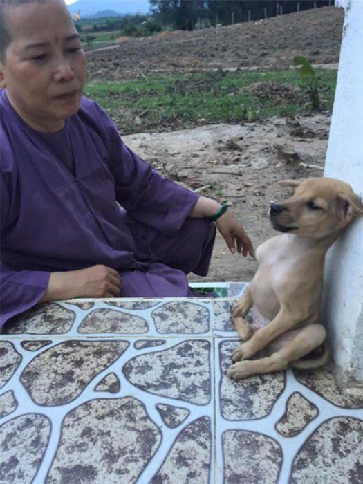 cachorro y monja budista