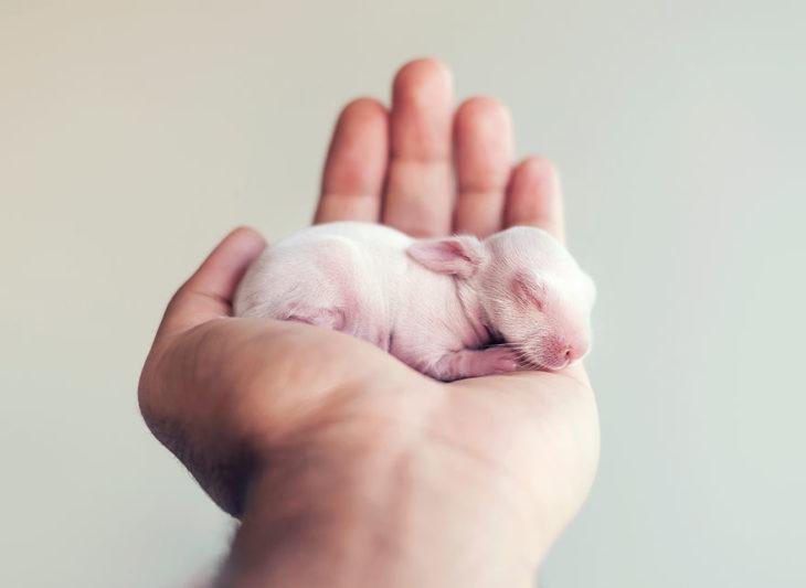 conejo cabe en una mano