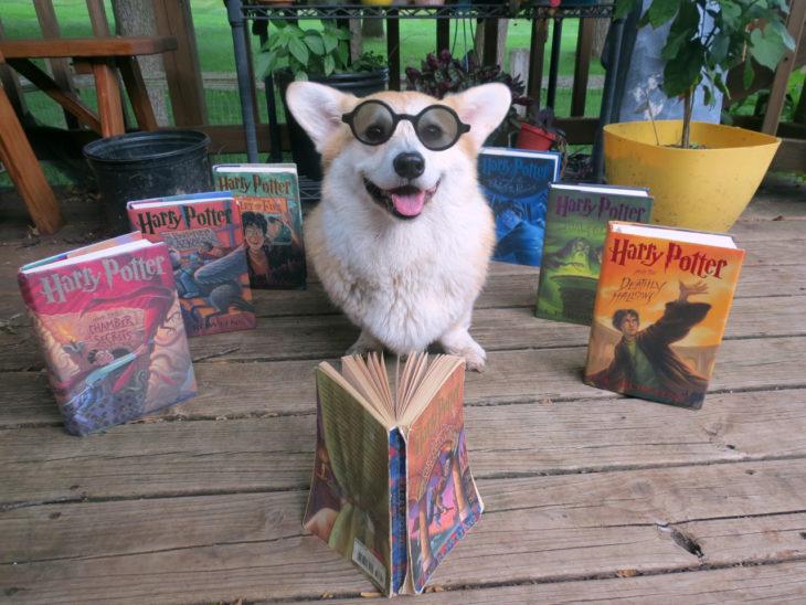 perro con libros de harry potter