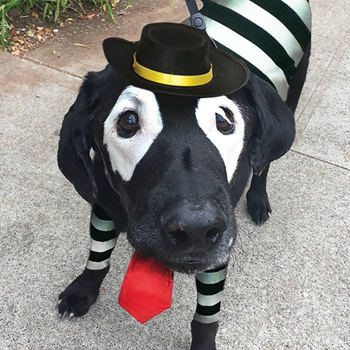 perro photoshopeado hamburglar