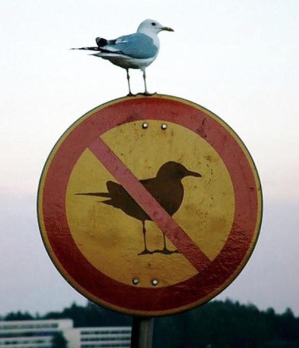 pajaro sobre señal de no se permiten pájaros