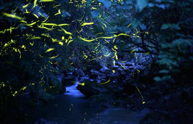 danza de luminicencia