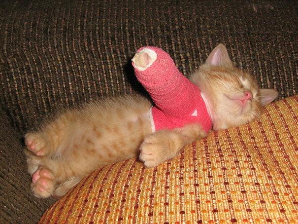 gato con yeso en la pata