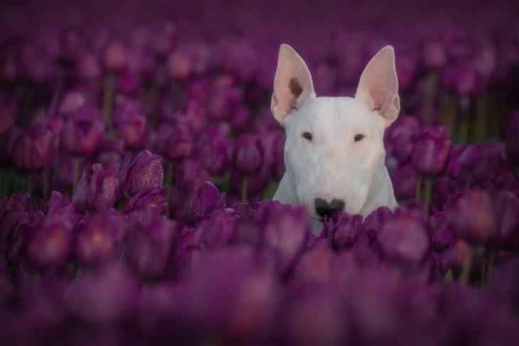 perrita entre flores púrpuras