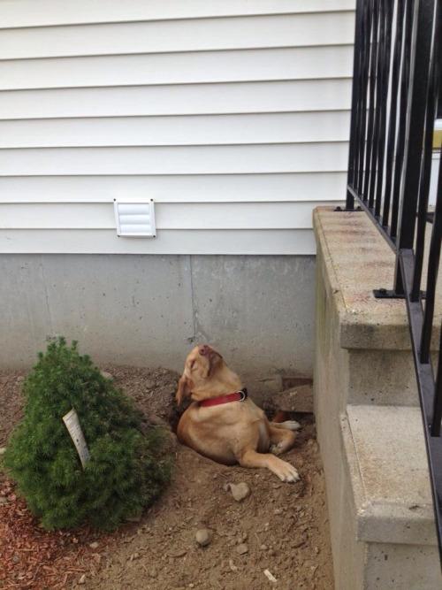 perro hizo un agujero en el jardín