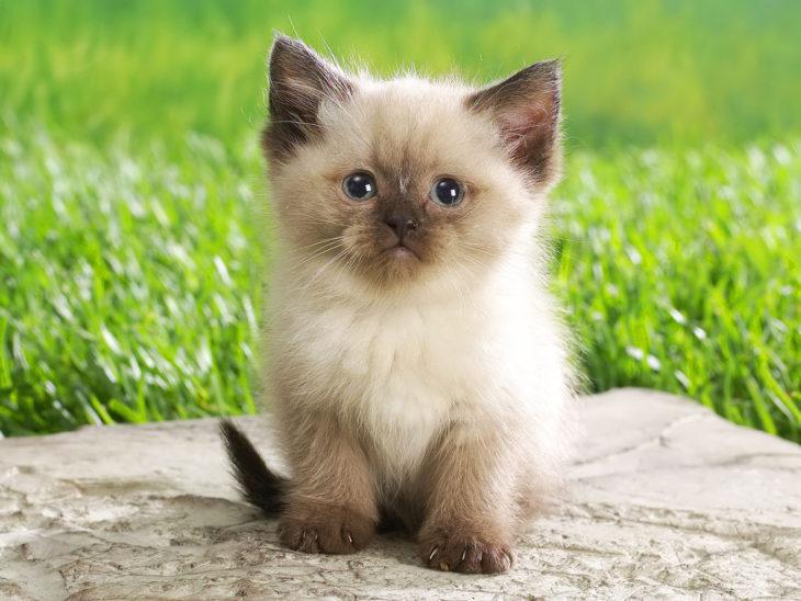 gato bonito regordete
