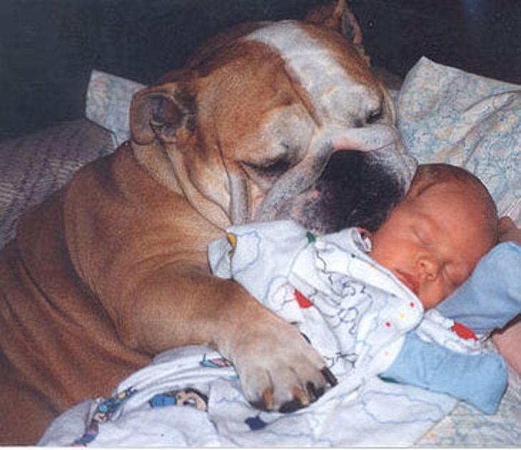 perro grande arrullando a un bebé