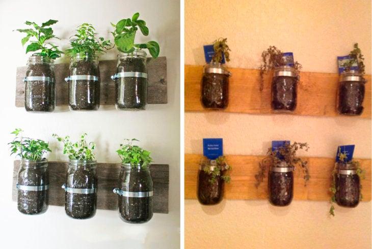 plantas en frascos