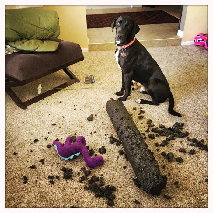 perro con un juguete de dinosaurio