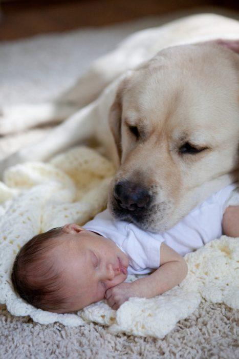 perro blanco velando el sueño de un bebé