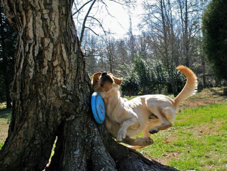 perro se estrella con un árbol
