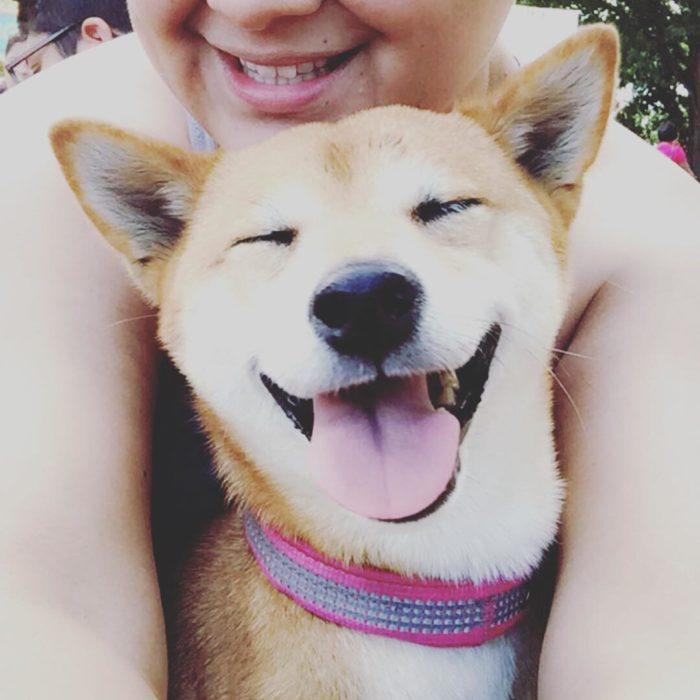 perrito como hashiko sonriendo
