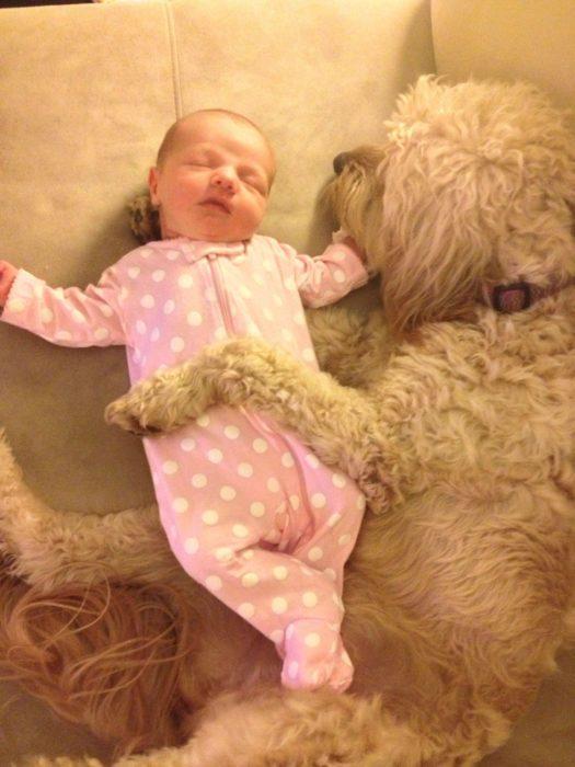 perrito french abrazando a recién nacido