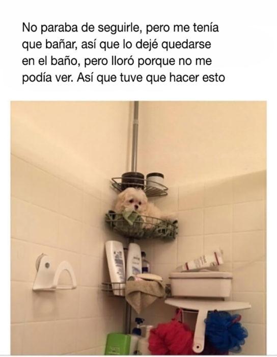 perrito en el baño