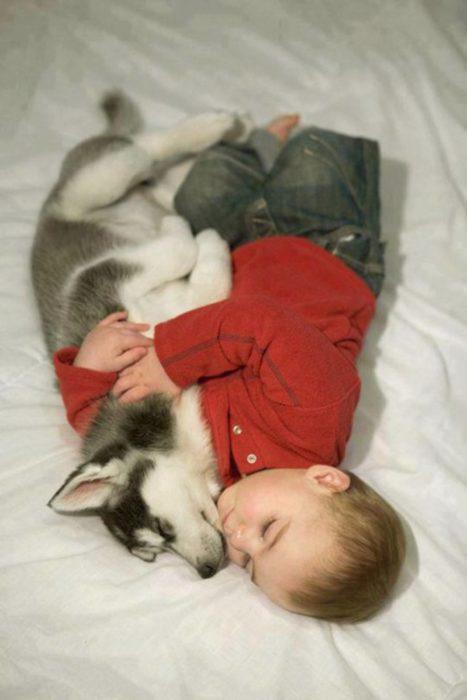 cachorro husky y no durmiendo juntos