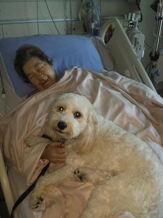 señora con un perro blanco
