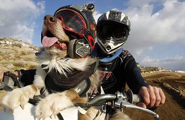 perro motociclista