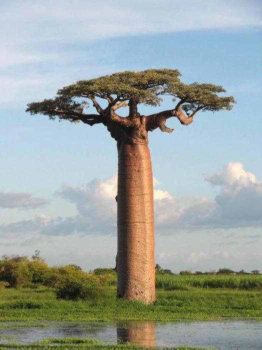 árbol impresionante