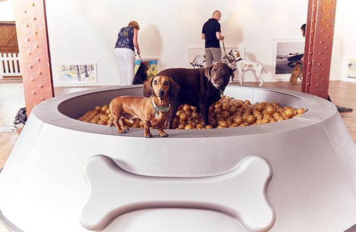 tazón gigante de perros
