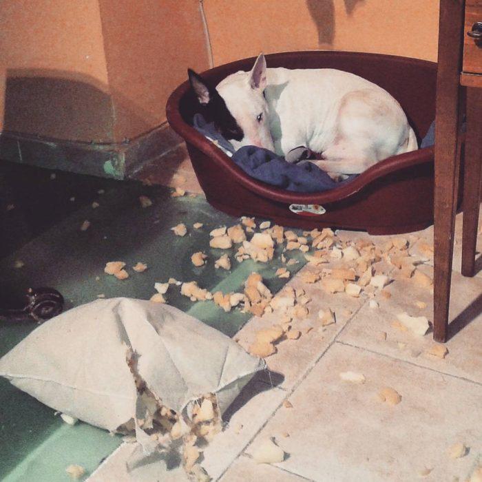 perro recostado en su cama