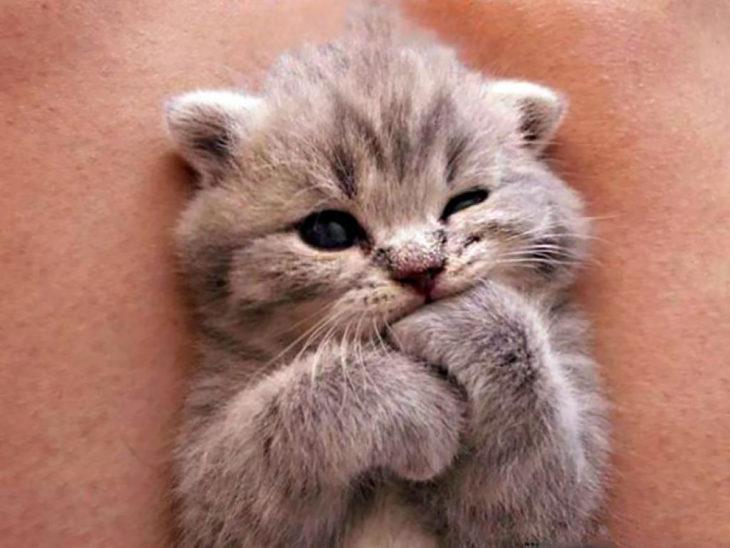 bebé gatito lamiendo la pata