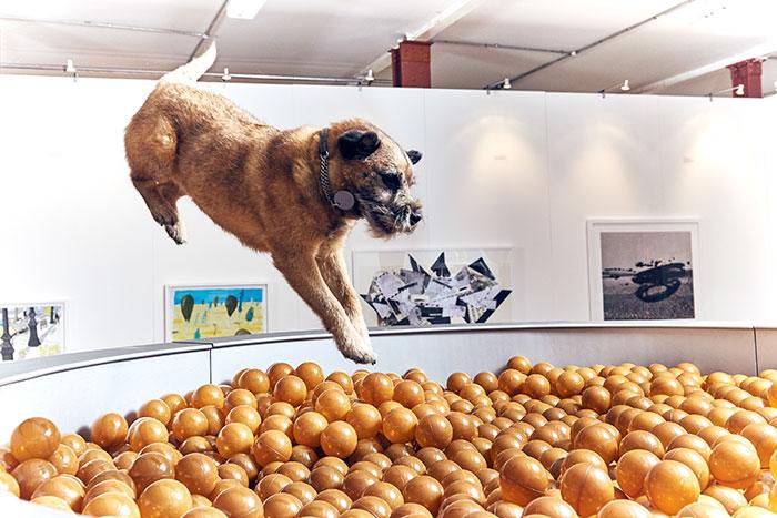perro saltando a muchas pelotas