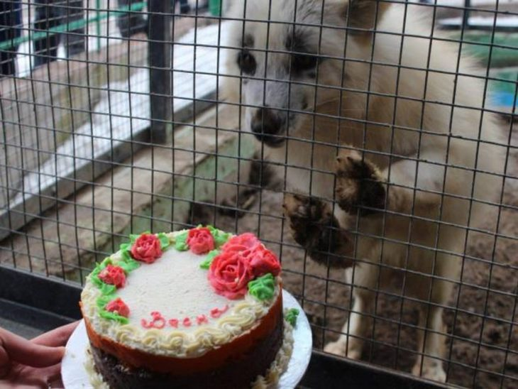 zorro viendo un pastel