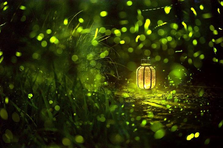 luciérnagas de luz verde