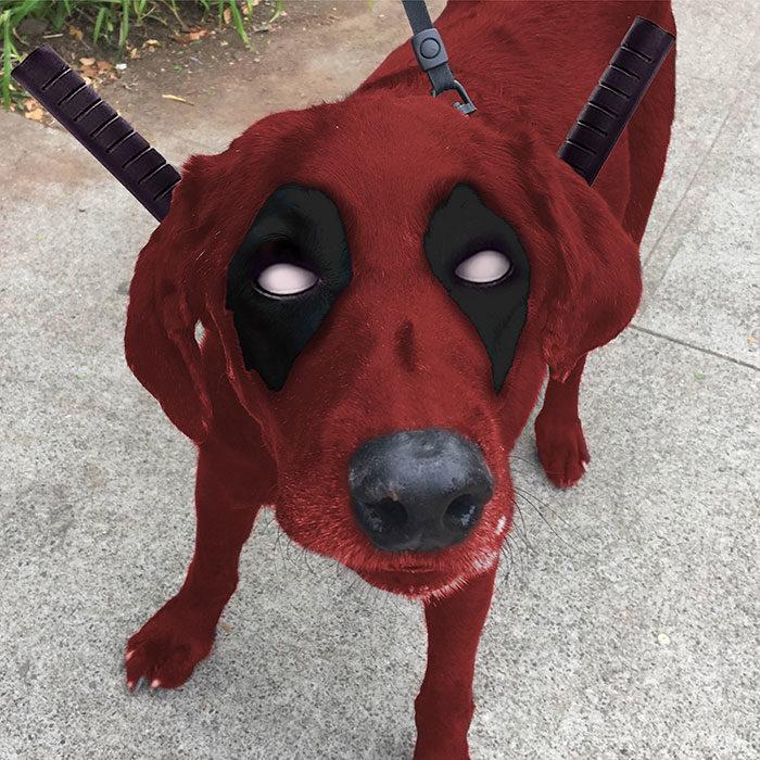 perrito deadpool