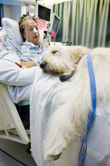 mujer en hospital con su mascota