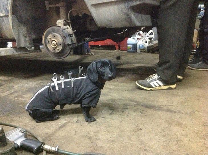 perro ayudante de mecánico