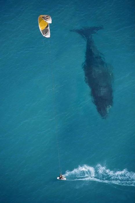 ballena bajo un bote