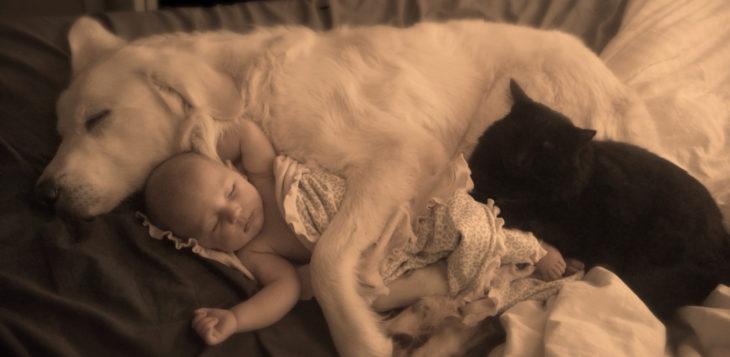 cachorro blanco abrazando a un bebé