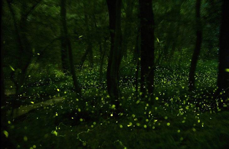 bosque oscuro con luciérnagas