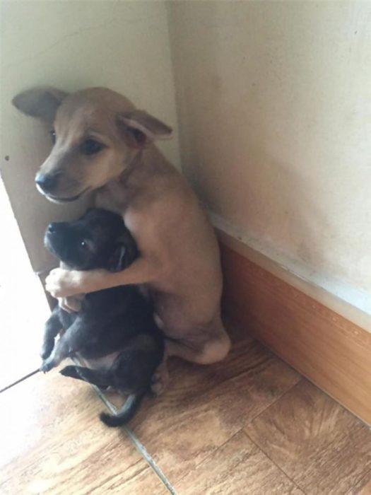 cachorro protege a cachorrito