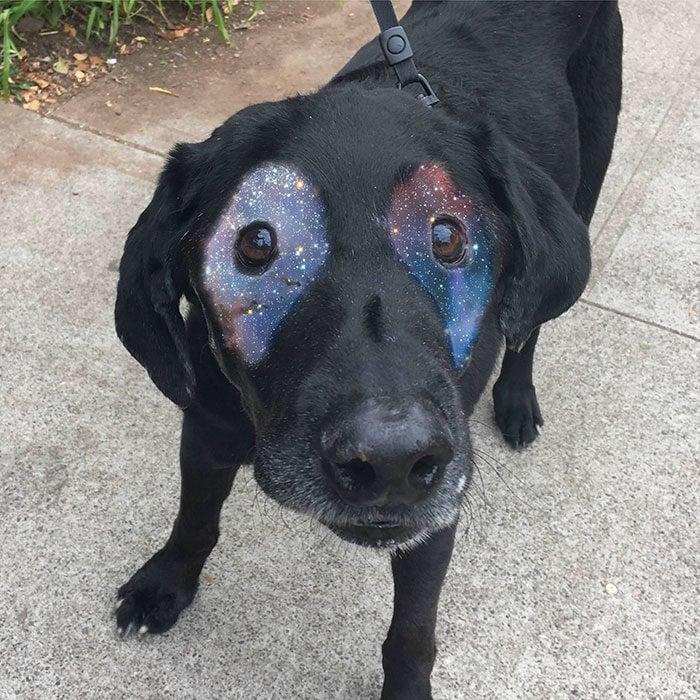 perrito con universo en sus ojos