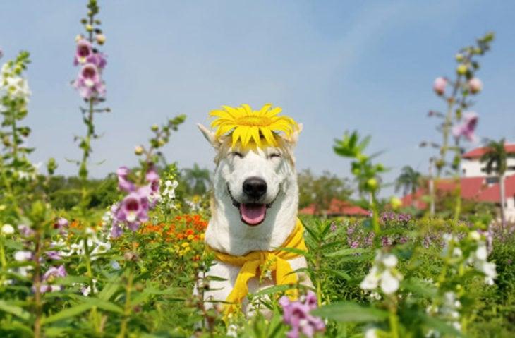 perro con una flor en la cabeza