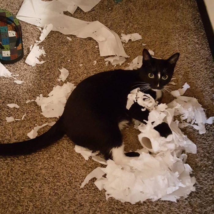 gato con papel de baño destruido
