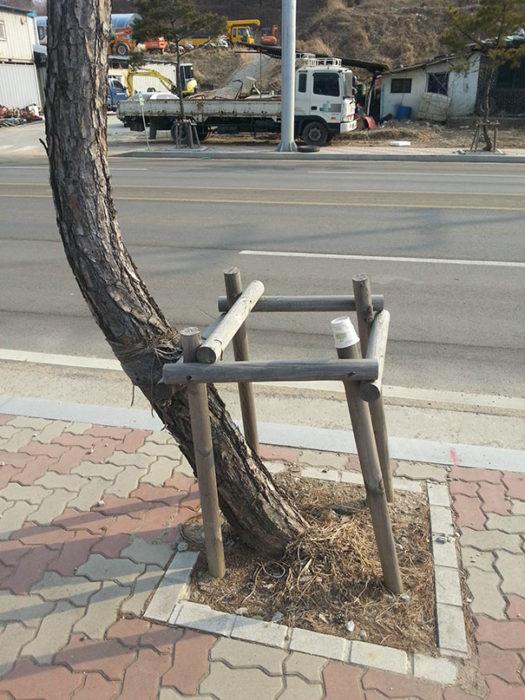 árbol deforme