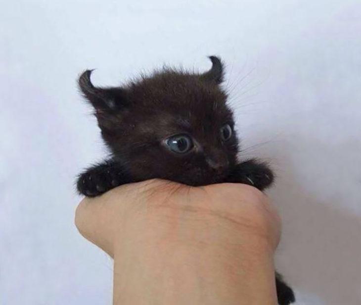 gatito con cuernos