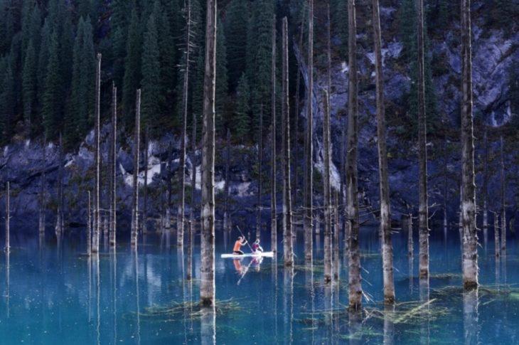 canoa en un bosque
