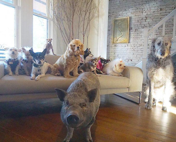 muchos animales en un cuarto