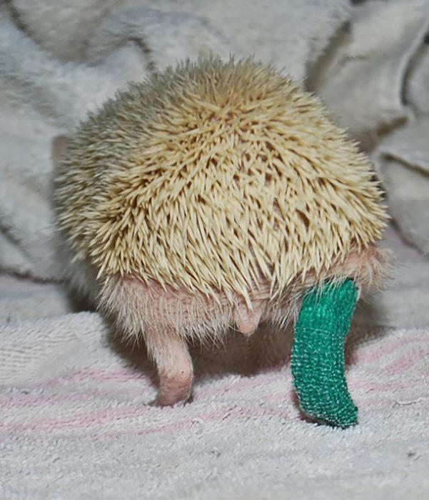 animal con pata enyesada
