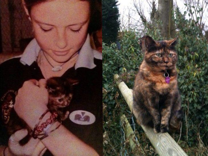 foto de gato bebé y gato viejo